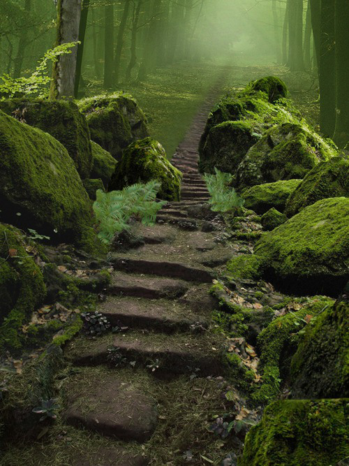 Sherwood Forest, Nottinghamshire, England